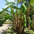 Playa Barrosa. Aire acondicionado Piscina Barbacoa -होटल और कमरे तस्वीरें