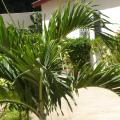 Kotu Island Lodge - szálloda és szoba-fotók