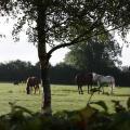 Fuchsia Lane Farm Cottages - hotel and room photos