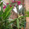 Casa Celia - viesnīcas un istabu fotogrāfijas