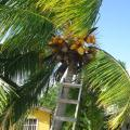 Posada Sunshine Paradise - Hotel- und Zimmerausstattung Fotos