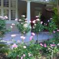 Oleander Guest House - hotel and room photos