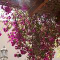 Hotel Mayarí - фотографии гостиницы и номеров