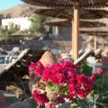 The Bedouin Moon Hotel - ホテルと部屋の写真
