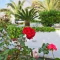 Makarios Hotel - viesnīcas un istabu fotogrāfijas