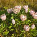 Grootbos Private Nature Reserve - Hotel- und Zimmerausstattung Fotos