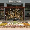 Sheraton Cascais Resort - Hotel & Residences - hotel and room photos