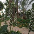 Hotel La Residence Hammamet - fotografii hotel şi cameră