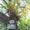 Paddy's Bamboo Guesthouse - fotos de hotel y habitaciones