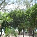 Coral Harbour Beach House & Villas - hotel and room photos