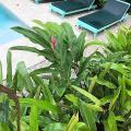 Tobago Hibiscus Golf Villas & Appartments - хотел и стая снимки
