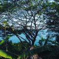 Casa Marimba - szálloda és szoba-fotók