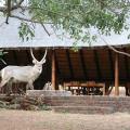 Masorini Bush Lodge - kamer en hotel foto's