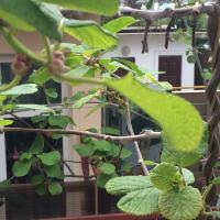 Гостевой дом «Алиса»