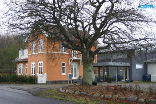 Estudio cuco en Svendborg
